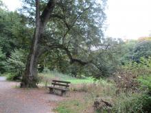 The ideal bench in the ideal woods